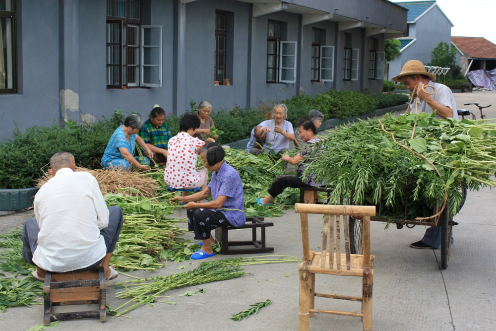 Cixi Training Center - workers & veggies-min